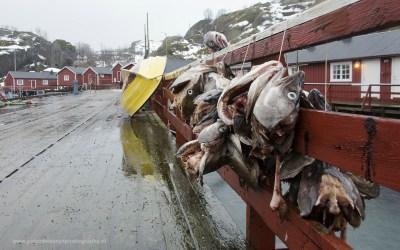 Nusfjord, Lofoten, Noorwegen, 11-3-2016