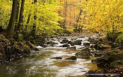 Rivier De Hoëgne, Jalhay, Ardennen, België, 24-10-2015