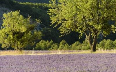 In de buurt van Banon, Provence, Frankrijk, 7-7-2016