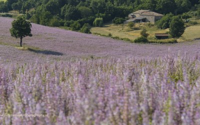 Tussen Revest du Bion en Banon, Provence, Frankrijk, 9-7-2016