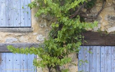 Monieux, Provence, Frankrijk, 11-7-2016