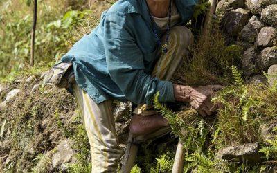 Er wordt tot op hoge leeftijd gewoon doorgewerkt, de rijstterassen van Batad, Luzon, Filipijnen, 15-11-2017