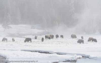 Yellowstone januari 2019