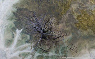 Jupiter Terace, Canary Spring, Mammoth Hot Spring, Yellowstone, USA, 19-1-2019