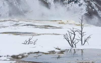 Main Terace, Jupiter Terace, Canary Spring, Mammoth Hot Spring, Yellowstone, USA, 16-1-2019