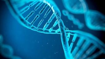 El ADN de los textos