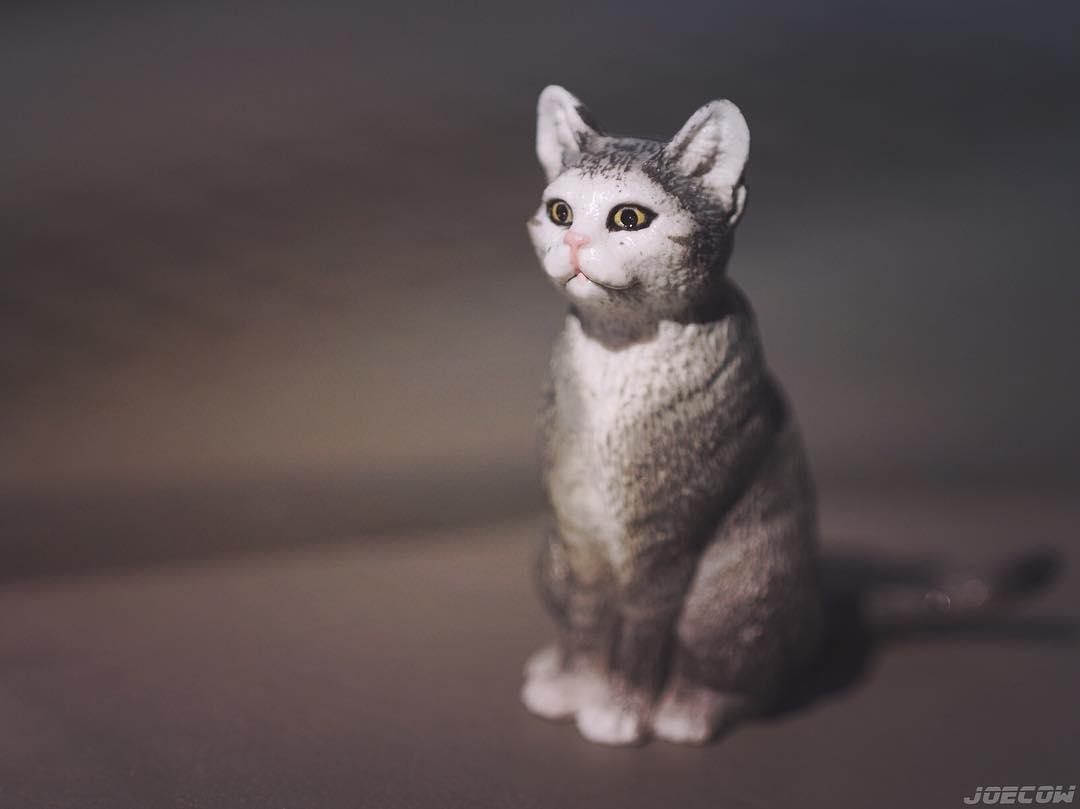 Neko is Japanese for cat