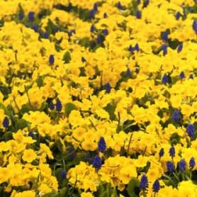 flower-tile-1