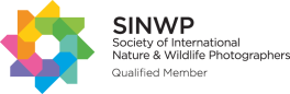 SINWP-Qualified-Member---Black-Text
