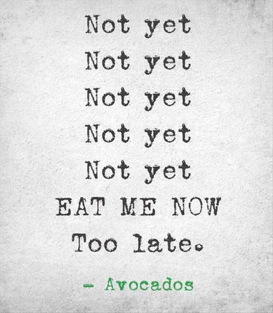 funny-eat-avocados-time-now-late