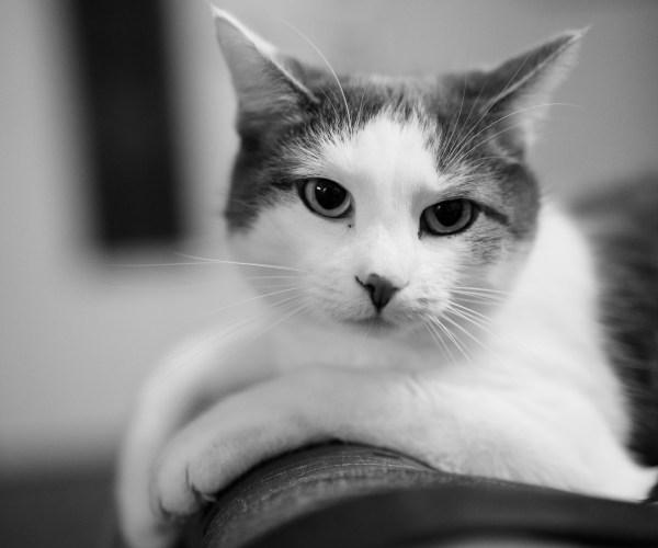 """Die Katze """"Lissi"""""""