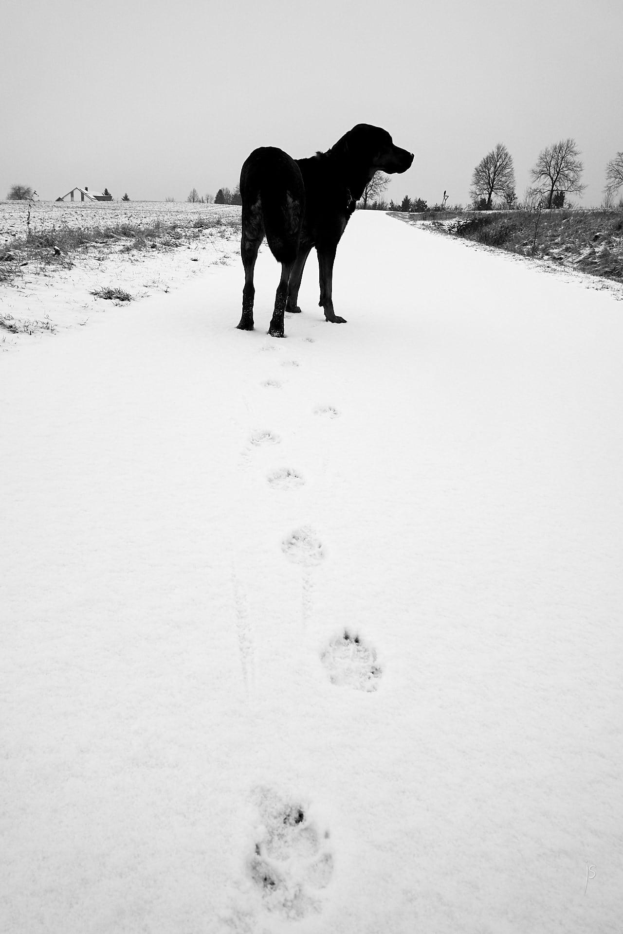 003 - Spuren im Schnee
