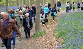 Bois de Hal 2017 (marcheurs) 01-05-2017 10-56-28