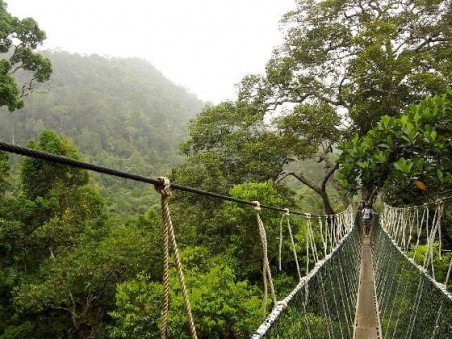 hutan wanagama wisata alam jogja hutan