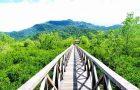 Hutan Mangrove Kulonprogo
