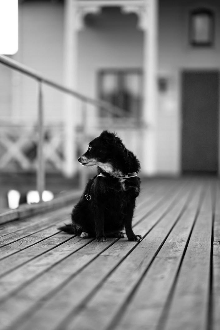 Tea porträttfoto hundfotografering