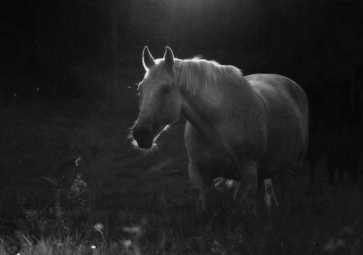 Ängsö white horse