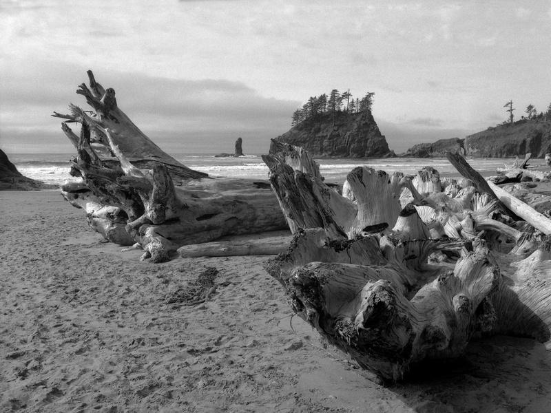 Second Beach, Olympic National Park, Washington (207)