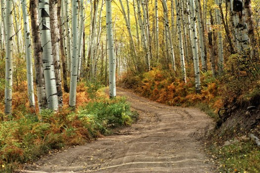 Fall Colors in Gunnison National Forest, Colorado (2011)