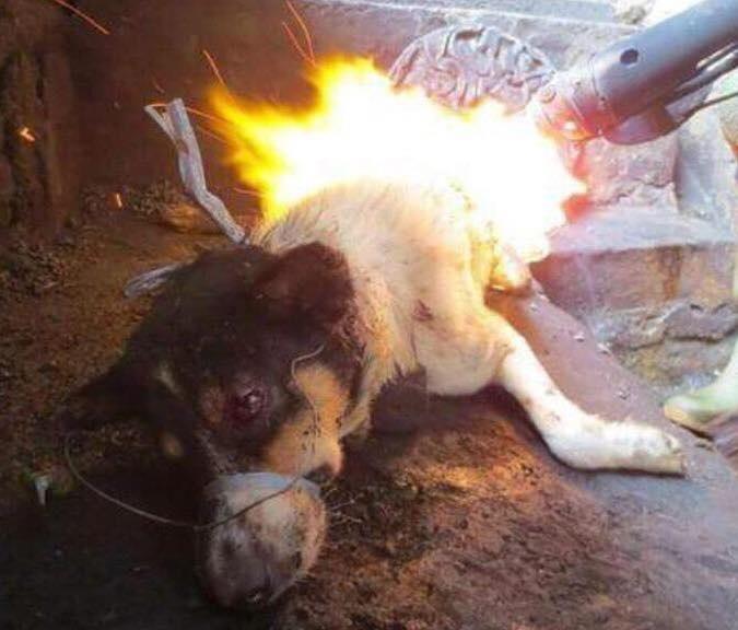 chines-burn-live-dog-tender-meat-yulin-festival