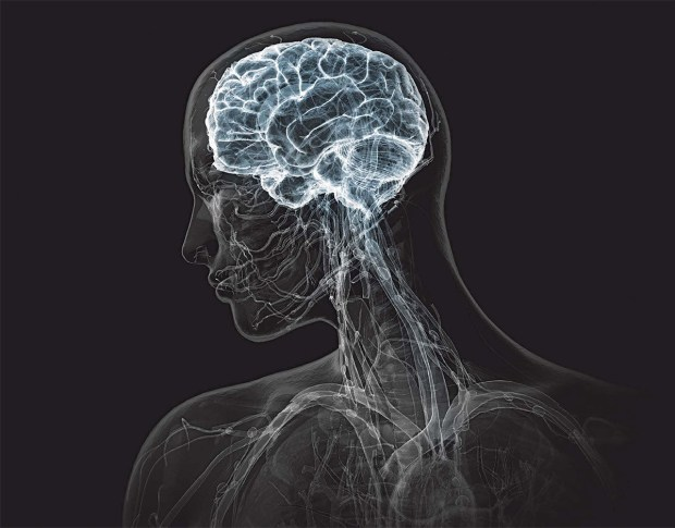 brain_portfolio2