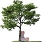 byg-tree
