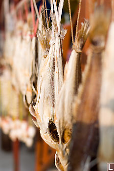Drying Fish Hanging
