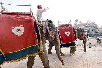 Two Elephants Walking In Fort
