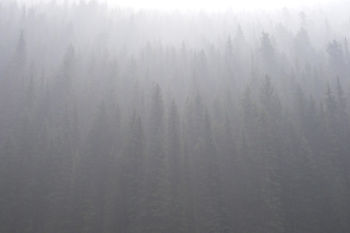 IMGP 0114_Smoke Through Trees
