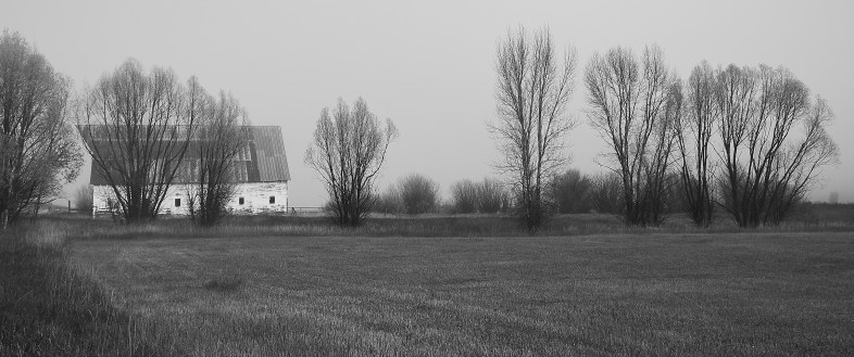 river road barn in fog w trees no 3