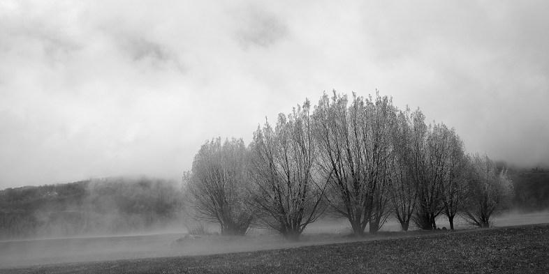 strawberry park foggy trees no 2