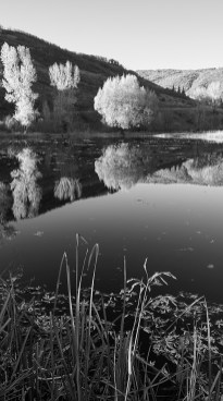 tree reflection rcr 129