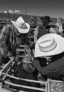 white hats at the roundup