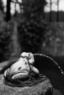 butchart frog