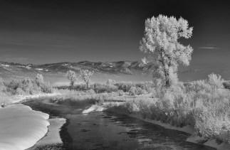 Yampa River Frosty Morning no 1