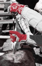 red gloves at roundup steamy
