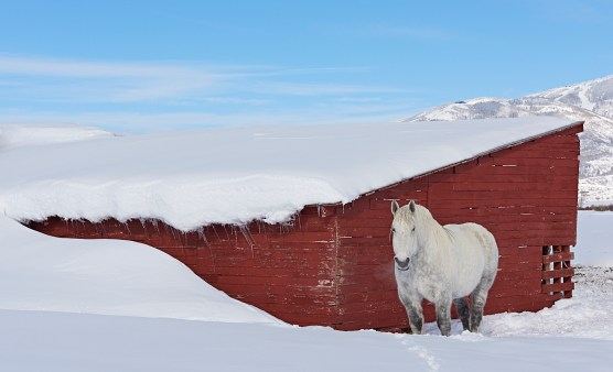 river road winter red shed white horse