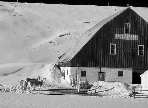 Hwy 40 barn and horses