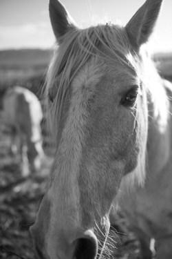 sunrise horse no 2