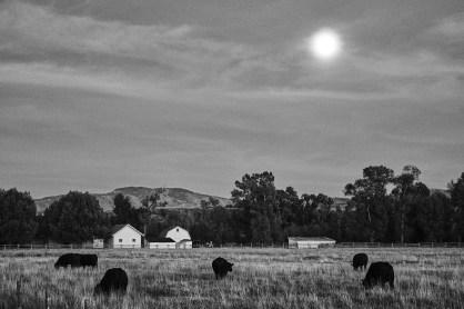 ranch dream