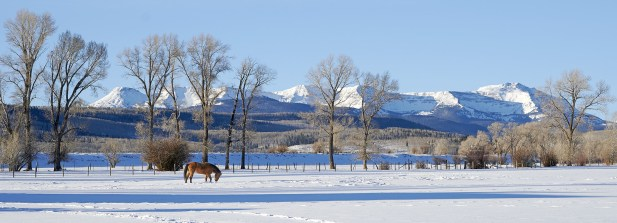 flat tops winter morning red horse tight for web