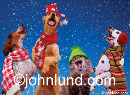Three Dogs And A Cat Sing Christmas Carols As The