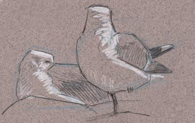 gulls in sun 2