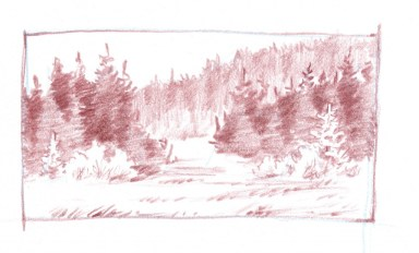 conifer forest thumb 7