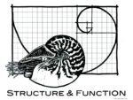 structue and function 2