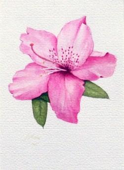 Pink Azealea painting