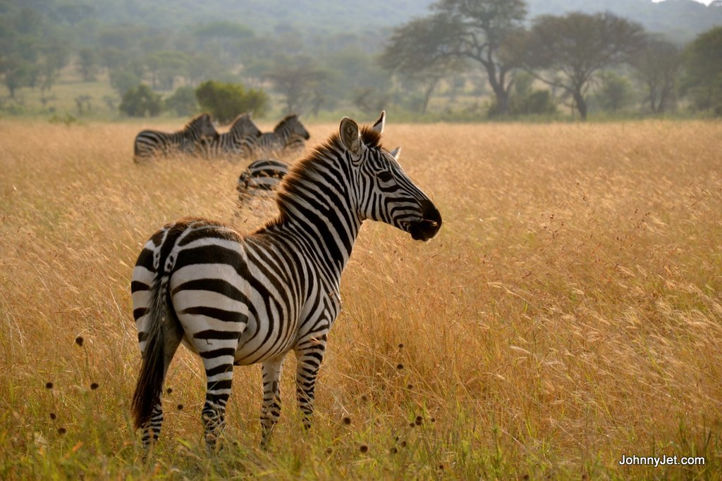Serengeti Balloon Safaris Tanzania Micato Safaris June 2013 -037