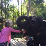 Feeding an elephant!