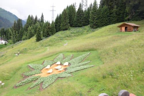Edelweiss at Senn Hütten