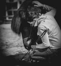 Fotograf i halmstad fotograferar hästar